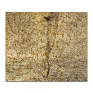 Evaporeo. Técnica mixta sobre madera. 46 x 55 cm.