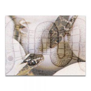 Serpentín 2. Serie La Destilación. Collage digital